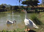 Pesque e Pague Garça Branca – São Roque de Minas – Serra da Canastra