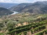 Vale do Douro – Portugal